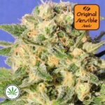 Original-Sensible-Seeds-Auto-Destroyer
