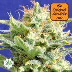 Original-Sensible-Seeds-Auto-Skunk