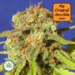 Original-Sensible-Seeds-Bruce-Banner-#3-Auto