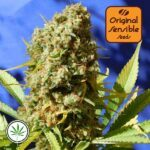 Original-Sensible-Seeds-Bruce-Banner-3-Fast