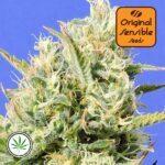 Original-Sensible-Seeds-CBD-Lemon-Aid-fem