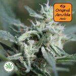 Original-Sensible-Seeds-Cannafuel-CBD-+-fem