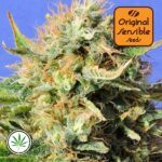 Original-Sensible-Seeds-Chronic-Lights-fem