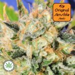 Original-Sensible-Seeds-Critical-Diesel-Auto