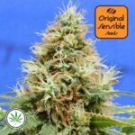 Original-Sensible-Seeds-Do-Si-Dos-OG-fem