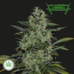 Kalashnikov-Seeds-Power-Russian-fem