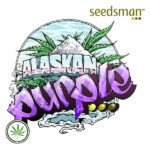 Seedsman-Alaskan-Purple