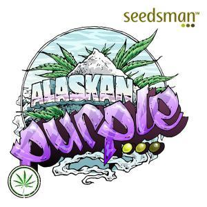 Seedsman-Auto-Alaskan-Purple