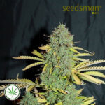 Seedsman-Auto-White-Widow