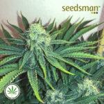 Seedsman-Big-Nugs-Fast