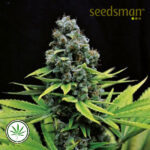Seedsman-CBD-Shark-Shock