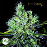 Seedsman-CBD-Sweet-n-Sour