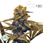 CBD-Botanic-CBD-New-York-Diesel-fem