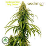 Seedsman-Early-Durban