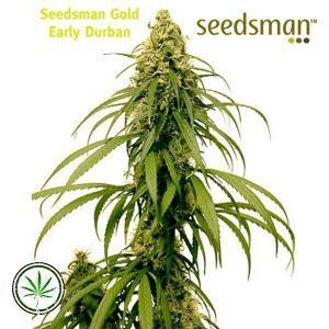 Seedsman-Early-Durban