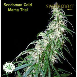 Seedsman-Mama-Thai-reg